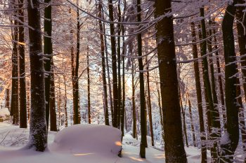 a snowy forest in winter with lots of snow